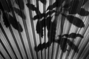 Shadow III