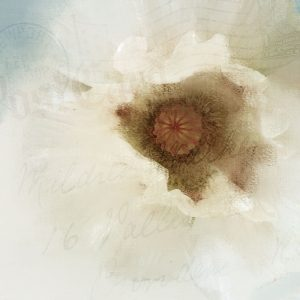 Postcard Poppy