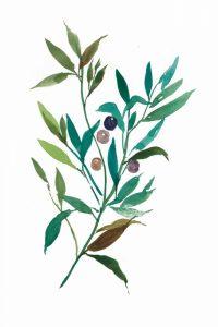 Olive I