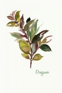 Oregano – Mini