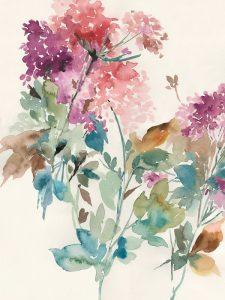 Sweet Hydrangea I