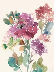 Sweet Hydrangea II