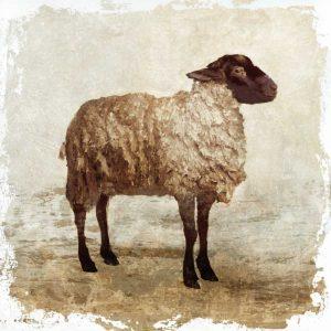 Sheep white border