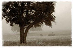 Calm Mist no Limb
