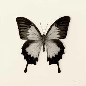 Butterfly III BW Crop