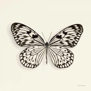 Butterfly V BW Crop