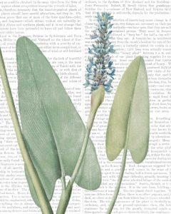 Summer Botanicals IV