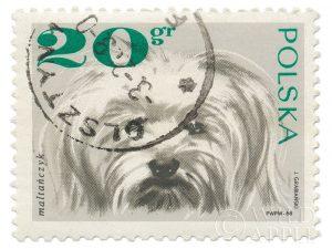 Poland Stamp II on White