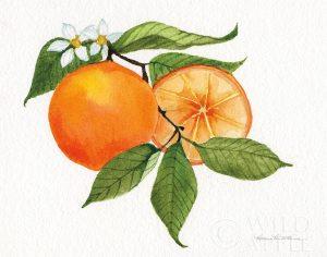 Citrus Garden V