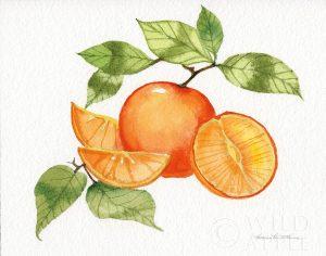 Citrus Garden VIII