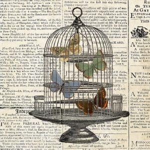 Butterflies in Birdcage