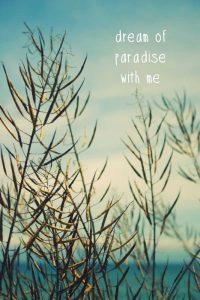 Dream of paradise