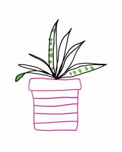Pink Pot Succulent