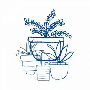 Indigo Succulents
