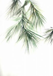 Pine Leaves II
