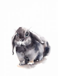 Portrait of a Rabbit V