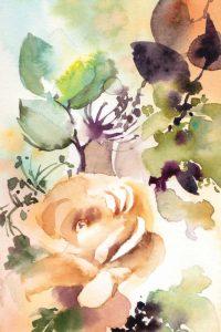 Rosy Rose II