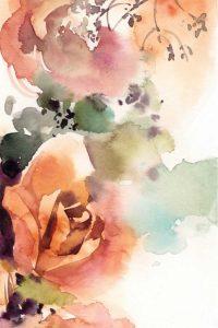 Rosy Rose III