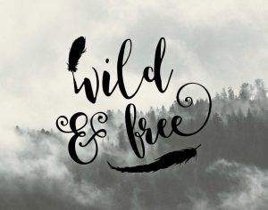 Wild and Free Feathers
