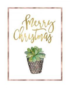 Merry Christmas Succulent
