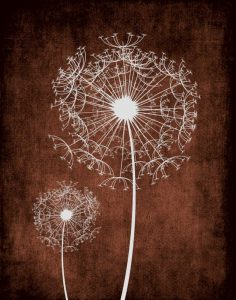 Dandelion on Brown