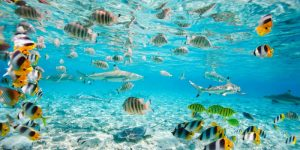 Fish and sharks in Bora Bora lagoon