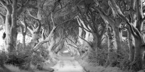 The Dark Hedges, Ireland (BW)