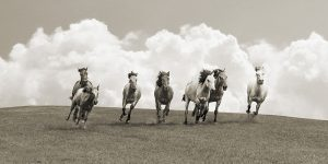 Herd of wild horses (BW)