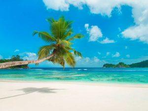 Tropical beach, Seychelles (detail)
