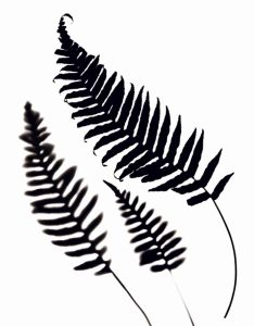 White Ferns Positive