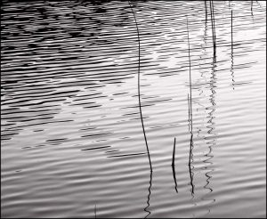 Reeds and Ripples I