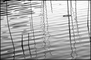 Reeds and Ripples II