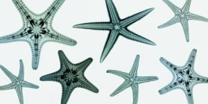 Starfish Collection (teal)