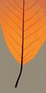 Leaves – B