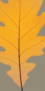 Leaves – F