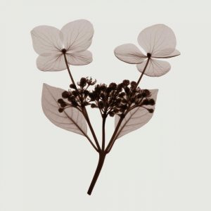 Hydrangea Stem Trio – C