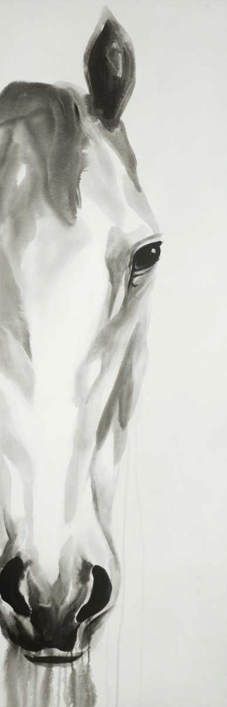 Black and White Horse Face