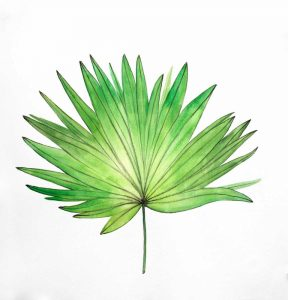 Fan Palm Leaf