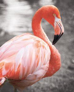 Flamingo I on BW