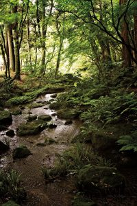Lush Creek in Forest
