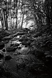 Lush Creek in Forest BW