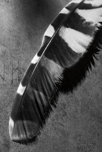 Feather Shadow II