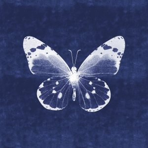 White Butterfly I