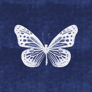 White Butterfly II