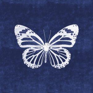 White Butterfly III