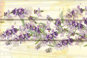 Floral Lavender III
