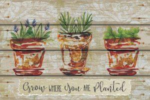 Grow Where