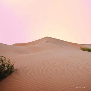 The Calm Dune