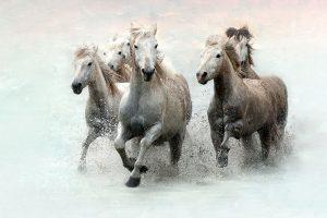 Run and Splash