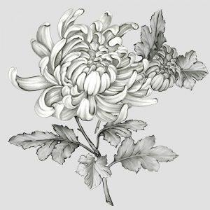 Grey Botanical II